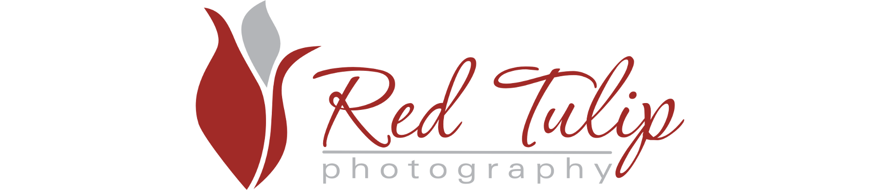 Red Tulip Photography