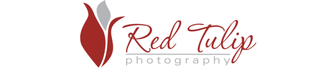 Red Tulip Photography logo brand new